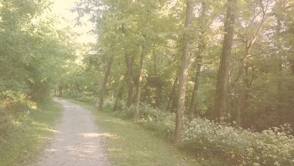 ws_trail